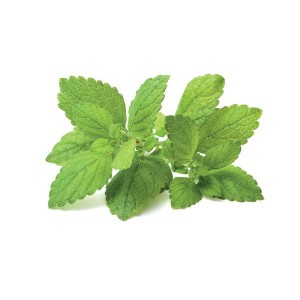 Lemon Balm - Melisa