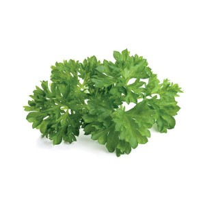 Parsley - Pietruszka